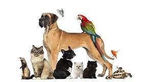 Товари для домашніх тварин
